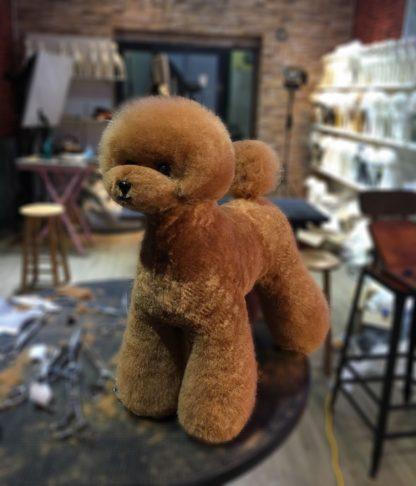 Mr Jiang Fell Teddy rot